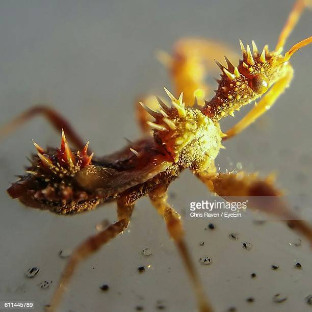macro shot of assassin bug - kissing bug stock photos and pictures