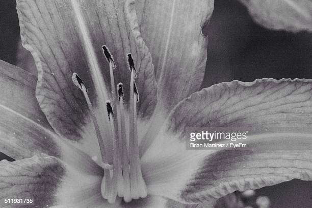 Macro shot of day lily flowers