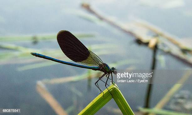Macro Shot Of Dragonfly On Plant