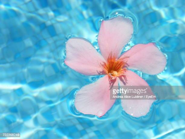 Macro Shot Of Flower Floating On Water