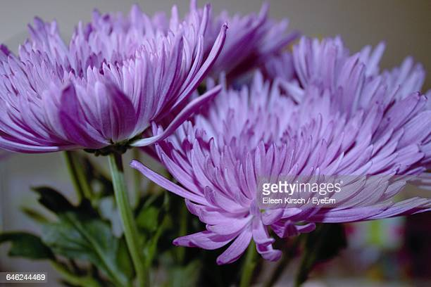 macro shot of flower - eileen kirsch stock pictures, royalty-free photos & images
