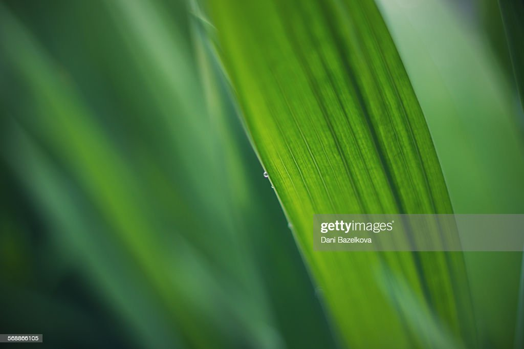 Macro shot of fresh green leaf and waterdrops : Stock Photo