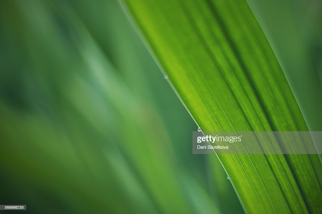 Macro Shot Of Fresh Green Leaves With Water Drops : Stock Photo