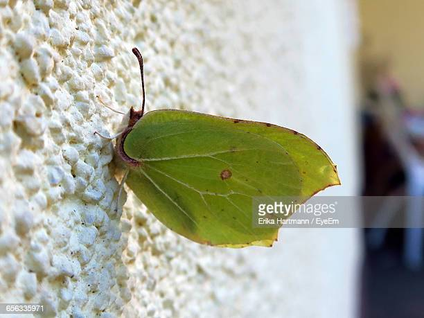 Macro Shot Of Green Insect On White Wall