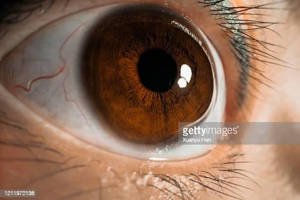 macro shot of human eye - 黒っぽい目 ストックフォトと画像
