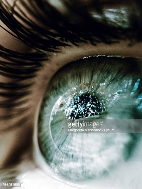 Macro Shot Of Human Eye