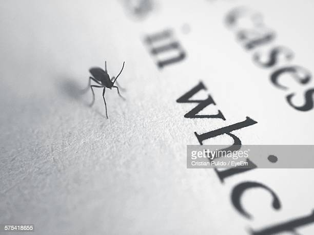 macro shot of insect on text on paper - cristian neri foto e immagini stock