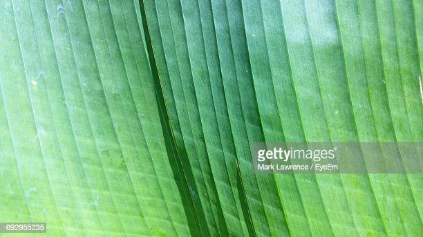 macro shot of leaf - botany stock pictures, royalty-free photos & images