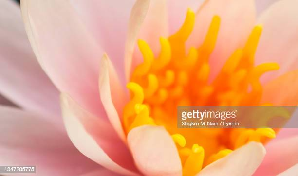 macro shot of pink flower - flower part stock pictures, royalty-free photos & images