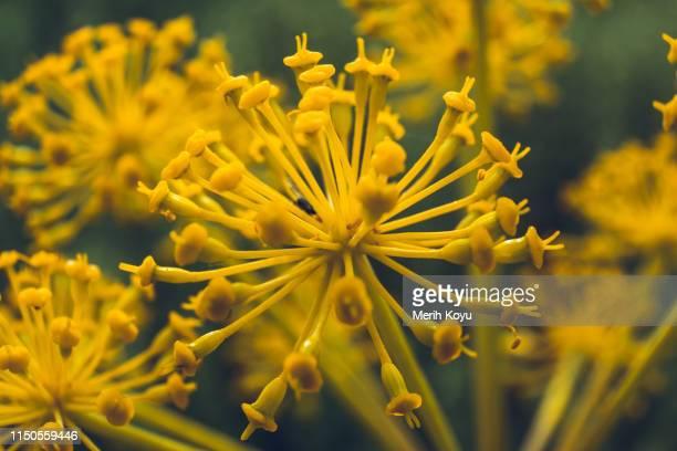 macro shot of yellow flower - essayer de marquer photos et images de collection