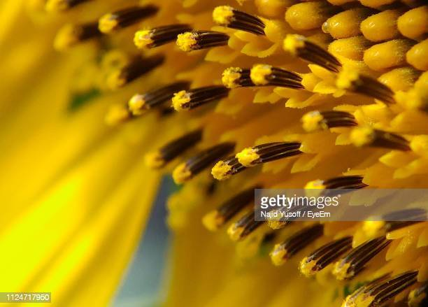 macro shot of yellow flowering plant - najid yusoff stock pictures, royalty-free photos & images
