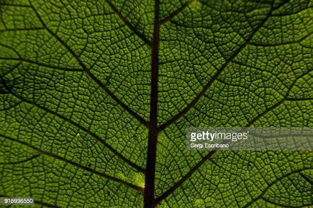 macro view of a leaf - macrofotografía fotografías e imágenes de stock