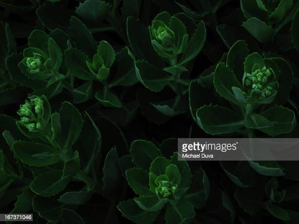 macro view of green flowers