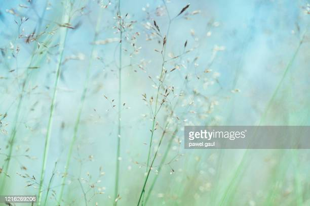 makroansicht der pastell-wiese bei sonnenuntergang - pastellfarbig stock-fotos und bilder