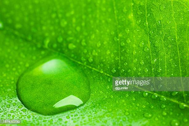 macro wet leaf detail - xylem stock photos and pictures