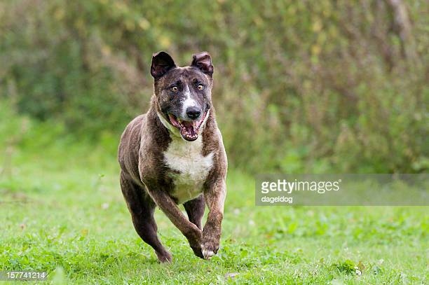 mad dogs and englishmen... - ugly dog stock photos and pictures