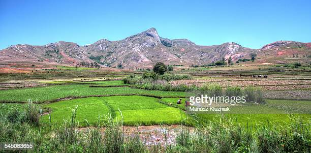 Madagascar rice fields and rocky mountains