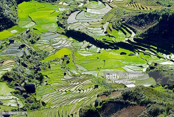 madagascar, rice fields on hills, elevated view - マダガスカル ストックフォトと画像