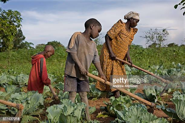 Madam Edith Kizito and two of her children farm her crops Kulika trained Edith in 2005 and since then her production and quality of crops has...
