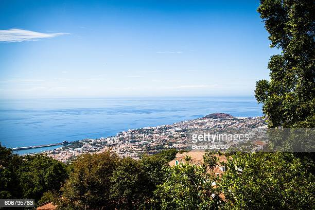 madeira island, funchal - madeira island stock photos and pictures