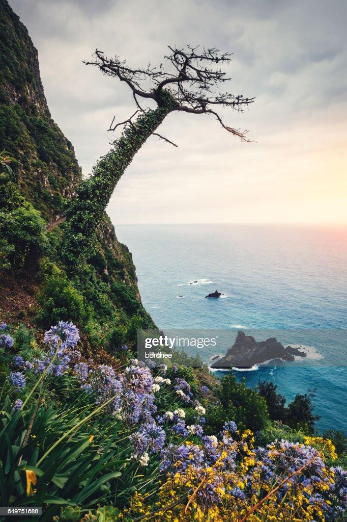 Madeira Island Landscape : Stock Photo