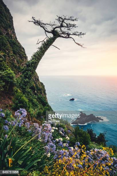 madeira island landscape - lareira stock pictures, royalty-free photos & images