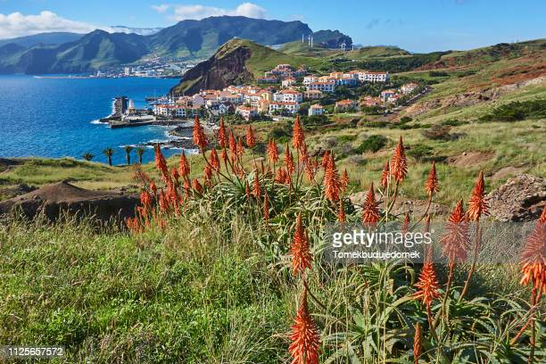 madeira - lareira stock pictures, royalty-free photos & images