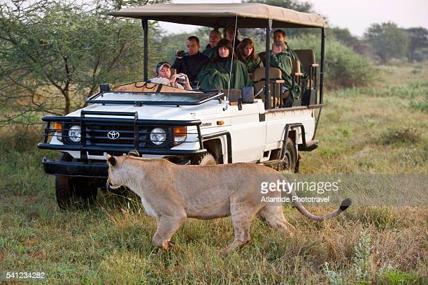 madikwe game reserve at the border with botswana - wildlife reserve stock pictures, royalty-free photos & images