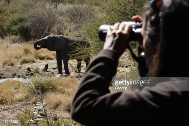 Madikwe game reserve Safari African elephant South Africa