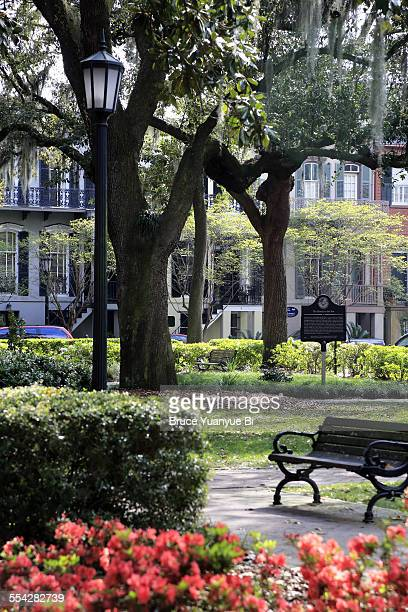 madison square - historic district stock pictures, royalty-free photos & images