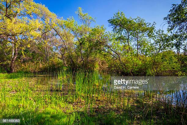 Madrona Marsh, Torrance, California
