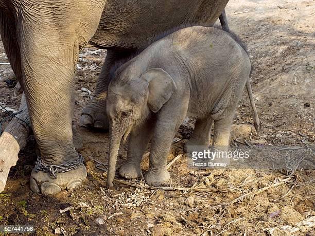 Lanugo Yuema s/ü/ßer Elefant Zug milchz/ähne aufbewahren s/ü/ße Erinnerung und Geschenkf/ür Baby f/ür Babyshaare Kinder