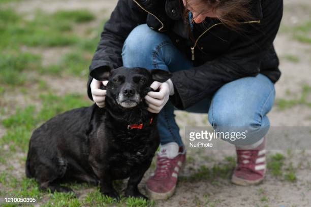 Magda a staff member pets Murzyn an abandoned dog inside specially prepared paddock at the Szarikton private hotel for dogs Along with its kennel...