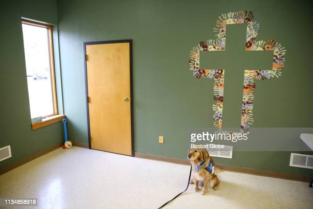 Maggie, a 7-year-old golden retriever comfort dog, sits for a portrait under a cross made with the handprints of members of Christ the King Lutheran...