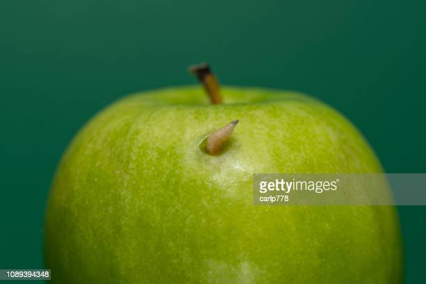 maggot poking out of a green apple - maggot stock photos and pictures