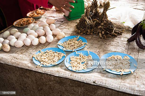 maggots are served for lunch. - maggot stock photos and pictures