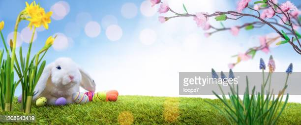 magic easter landscape - italian easter stock pictures, royalty-free photos & images