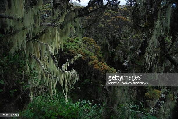 magic forest on mt meru. - meru filme stock-fotos und bilder