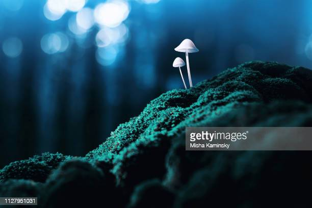 magic mushrooms - lsd stock pictures, royalty-free photos & images
