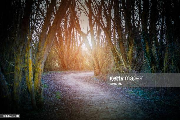 Ruta mágica en el Parque
