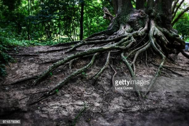 Magic Roots