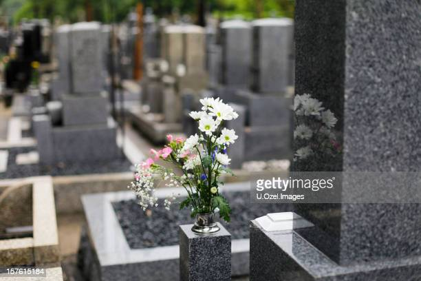 magical cemetery - tombstone stock pictures, royalty-free photos & images