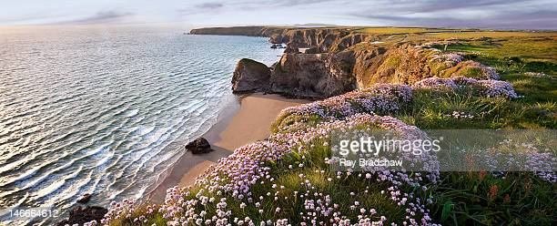 magical cornwall - cornwall england stock pictures, royalty-free photos & images