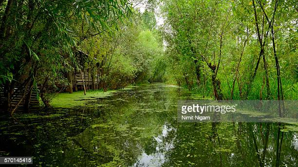 magical dal lake - kashmir valley stock photos and pictures