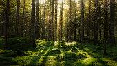 Magical fairytale forest.