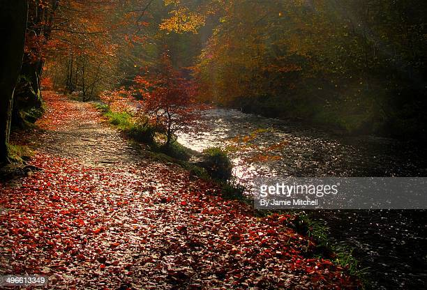 magical forest - brook mitchell stock pictures, royalty-free photos & images