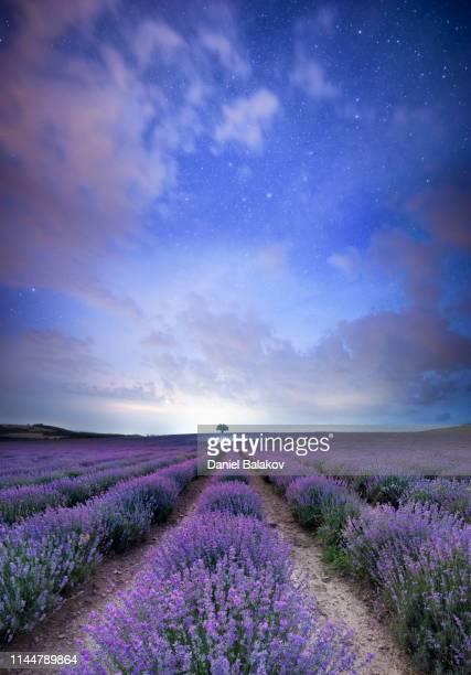 notti di lavanda magica - paesaggi foto e immagini stock