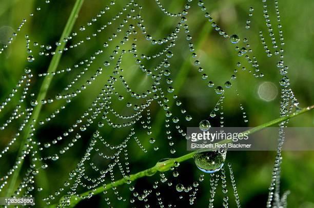 Magical Net