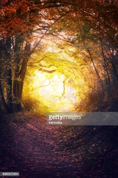 秋の公園で魔法のパス