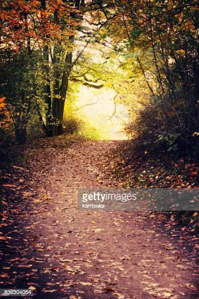Magische pad In herfst Park